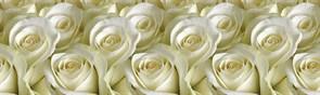 Фартук кухонный Белые розы, 3000х600х1.5мм, пластик АВС, термопечать